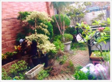 ※ 換季時節,為家裡的庭院換新裝。