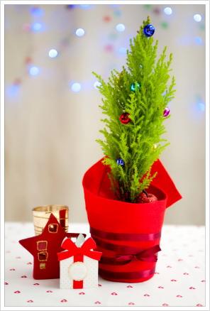 荳芽設計裝飾的小聖誕樹