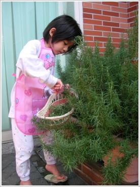 ※ 假日的清晨,蝴蝶在庭院採收迷迭香(Rosemary),她準備拿來泡茶⋯⋯
