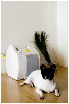 Melon和我們家的Honeywell空氣清淨機