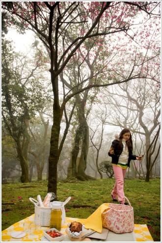 陽明山.櫻花樹.荳芽